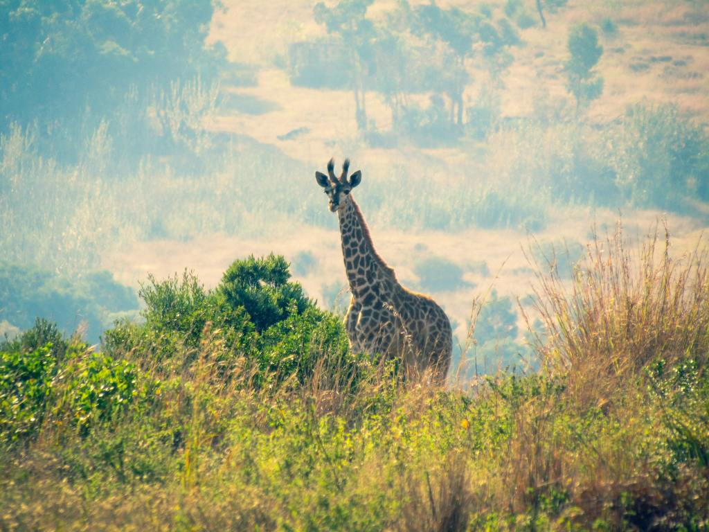 The following are 15 strategies which can be used to promote and improve tourism industry in Africa