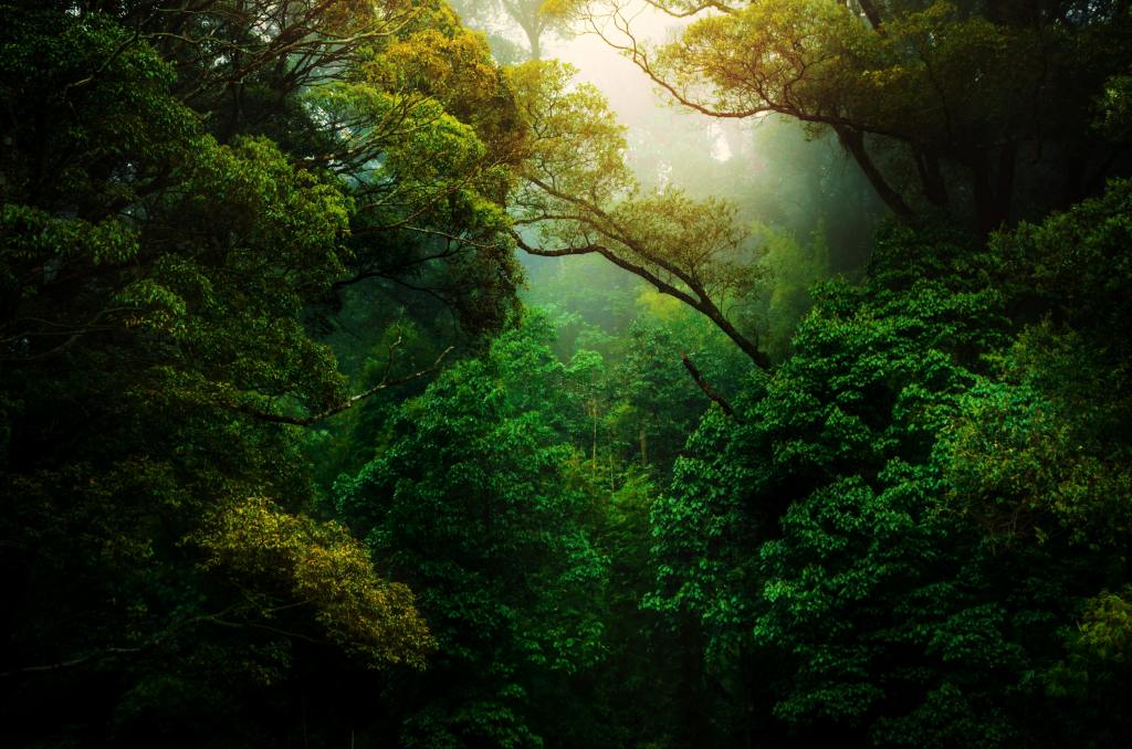 The following are problems faced in exploitation and conservation of equatorial or tropical rainforests: