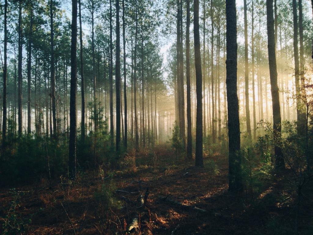 Kenya's softwood forests are found in highlands while Canada's are found in lowlands due to cool temperatures