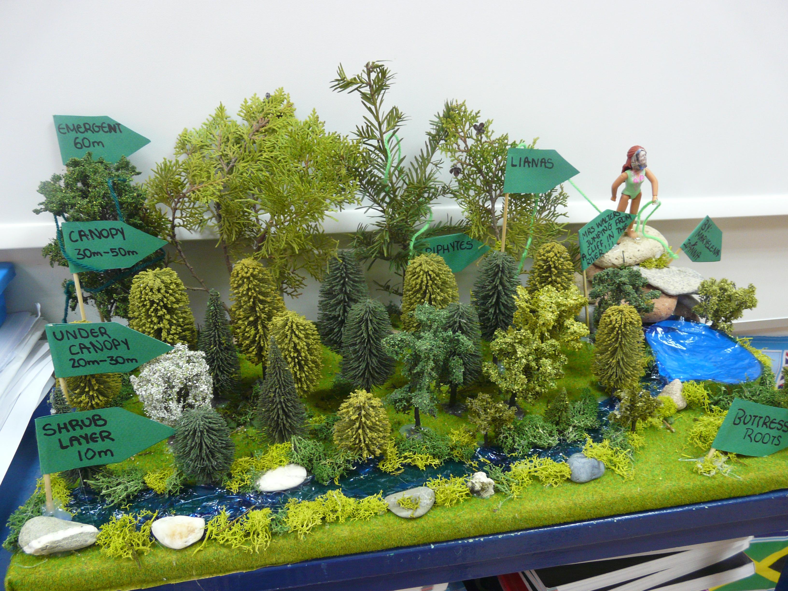 Grade 8 Tropical Rainforest Models