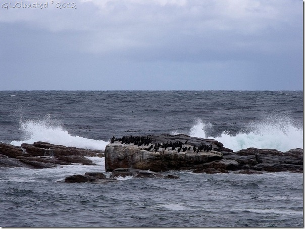 04a Birds on rock & waves crashing Cape of Good Hope Table Mt NP Cape Pennisula ZA (1024x768)