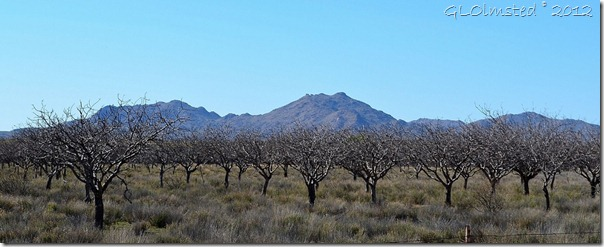 07a Orchard along Deer Creek rd AZ (1024x414)