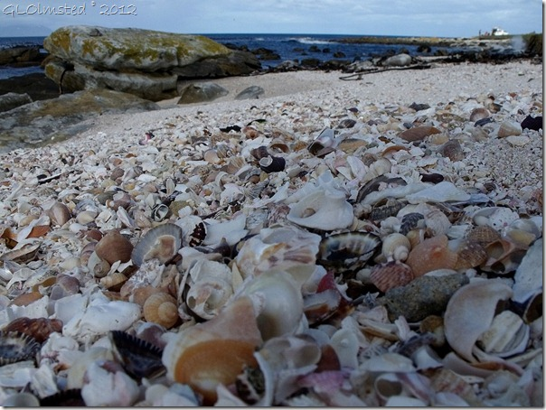 08a Shell beach and bay Buffels Bay Table Mt NP Cape Pennisula ZA (1024x768)