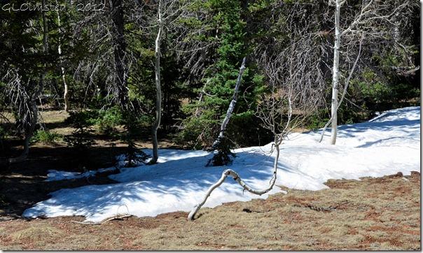 01 Snow bent Aspen Kaibab NF AZ (1024x611)