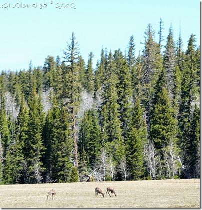 04 Mule deer on the meadows Kaibab NF AZ (988x1024)