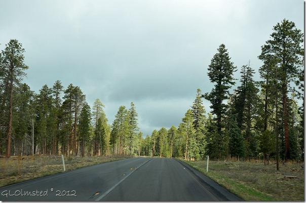 05e Sun on the pines Hwy 67 N Kaibab NF AZ (1024x678)