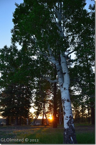 07 Sunset through trees NR GRCA NP AZ (678x1024)
