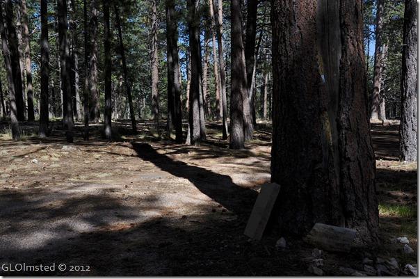 01 Forest shadows NR GRCA NP AZ (1024x678)