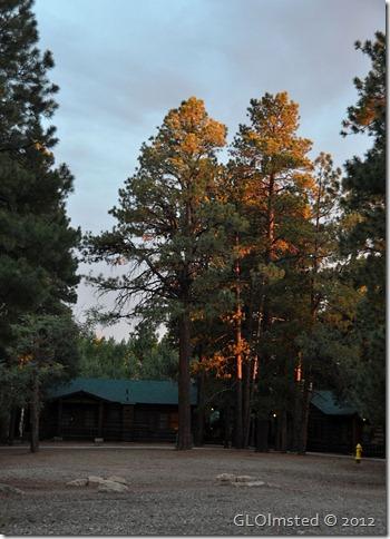03ecr Ponderosa pines by cabins at NR GRCA NP AZ (738x1024)