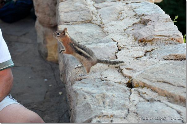 01 Ground squirrel begging at Grand Lodge NR GRCA NP AZ (1024x678)