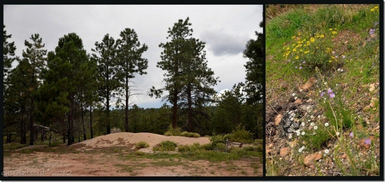 02e lunch place on Walhalla Plateau NR GRCA NP AZ collage (1024x482)
