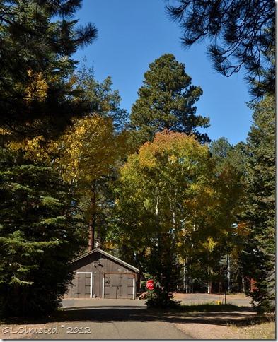 01 Fall leaves NR GRCA NP AZ (829x1024)
