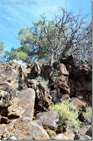 03 Nampaweap Rock Art Site BLM AZ (678x1024)