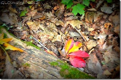05 Fall leaves on Kaskaskia & Ottawa Canyons trail Starve Rock State Park IL (1024x678)