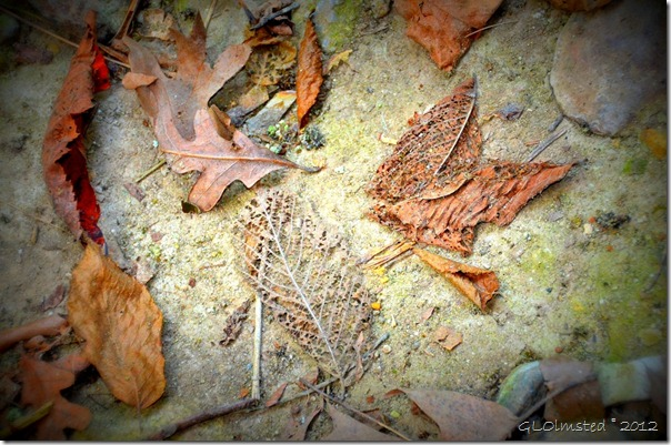15 Fallen leaves along Kaskaskia trail Starve Rock State Park IL (1024x678)