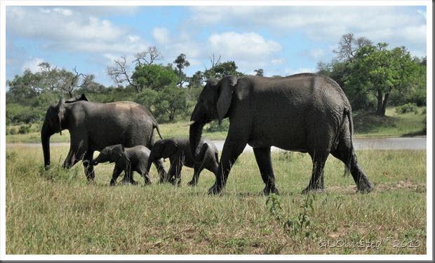 Elephants Kruger NP