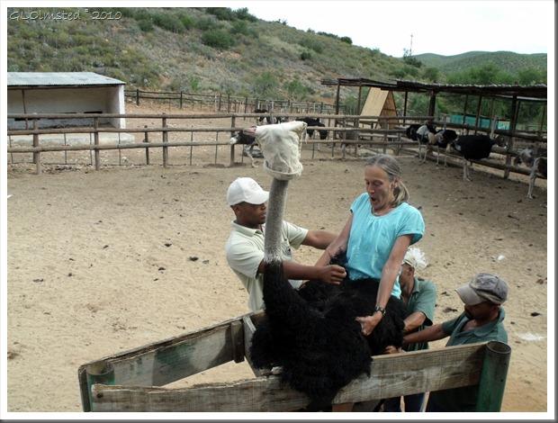 Gaelyn on an ostrich