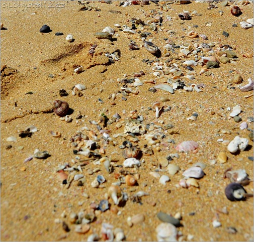 Seashells on Kelly's Beach Eastern Cape South Africa