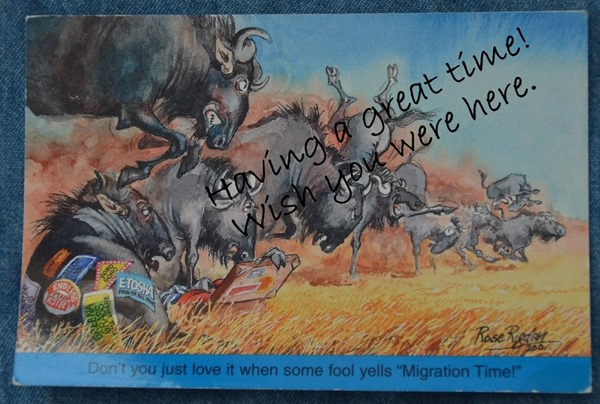 Funny postcard from SA