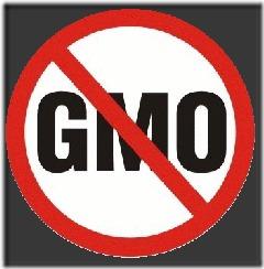 No to GMO symbol