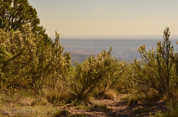 View South of canyon from campsite Timp Point Kaibab National Forest Arizona