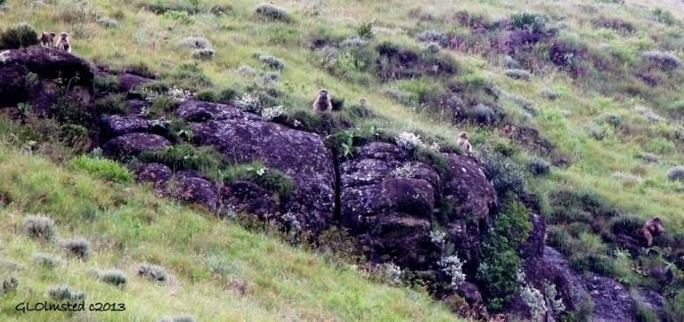 Baboons Drakensburg hike KwaZulu-Natal South Africa