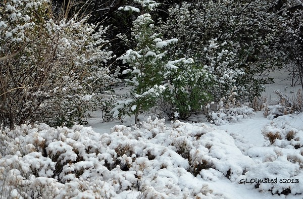 Snowy landscape Yarnell Arizona