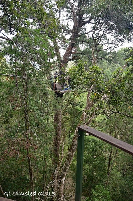 Looking at platform 3 Tsitsikamma Canopy Tour Storms River South Africa