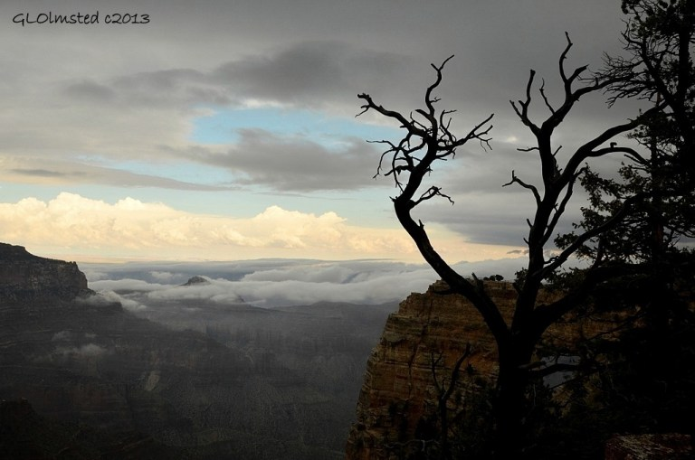 Monsoon clouds in canyon from Cape Royal trail North Rim Grand Canyon National Park Arizona