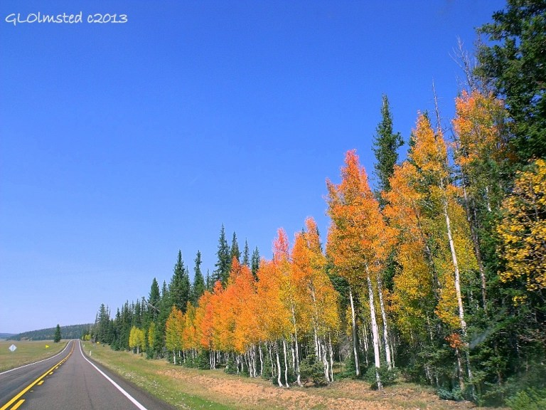 Fall color SR67 North Kaibab National Forest Arizona