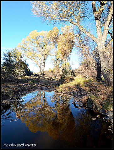 Cottonwood reflection Yarnell Arizona