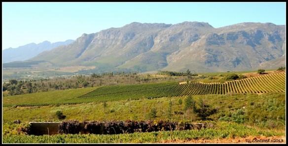 Vineyards & mts Stellenbosch South Africa