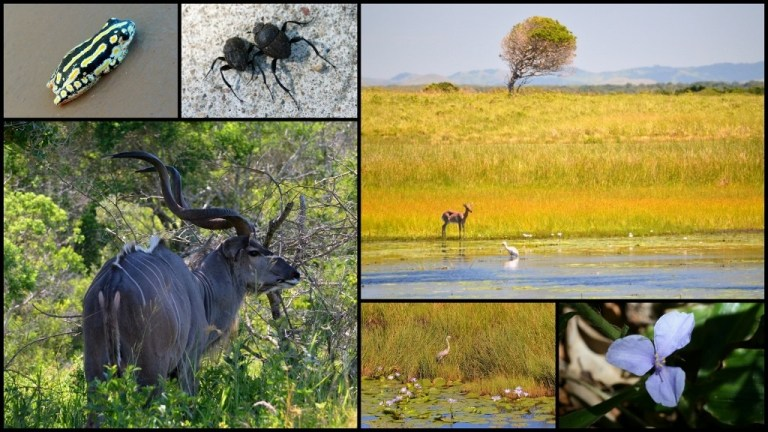 Collage iSimangaliso Wetland Park South Africa