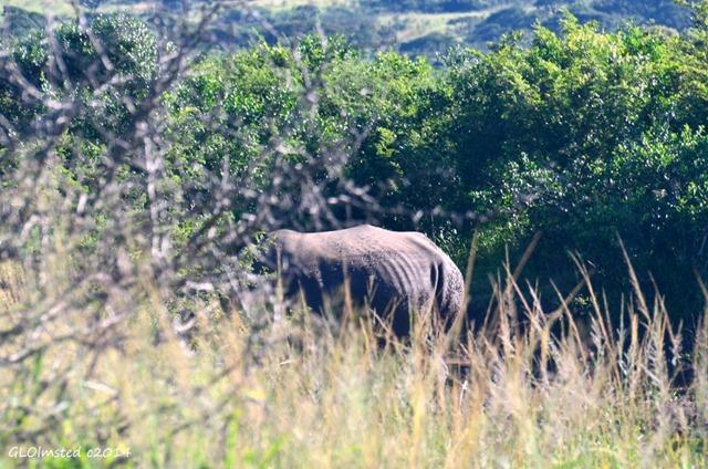 Rhino Hluhluwe iMfolozi National Park South Africa