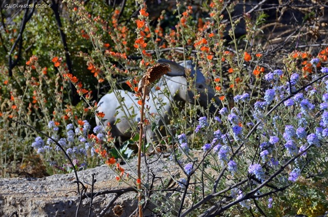 One-eared burro statue in wildflowers Yarnell Arizona