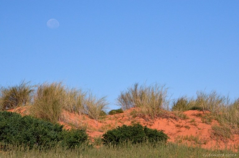 Moon over dunes Kgalagadi Transfrontier Park South Africa