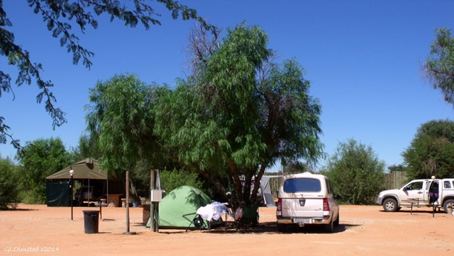 Our camp Twee Rivieren Kgalagadi Transfrontier Park South Africa