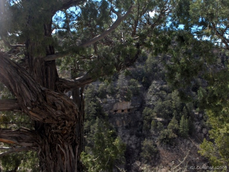 03 a282 Juniper & ruins Walnut Canyon NM AZ fff62 (1024x769)