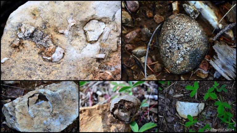 04 Fossils AZ Trail NR GRCA NP AZ (1024x576)