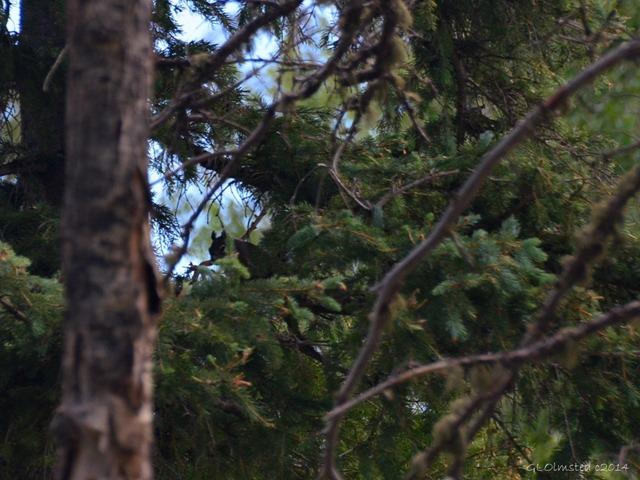 07 DSC_3459 Squirrel AZ Trail NR GRCA NP AZ g (1024x768)