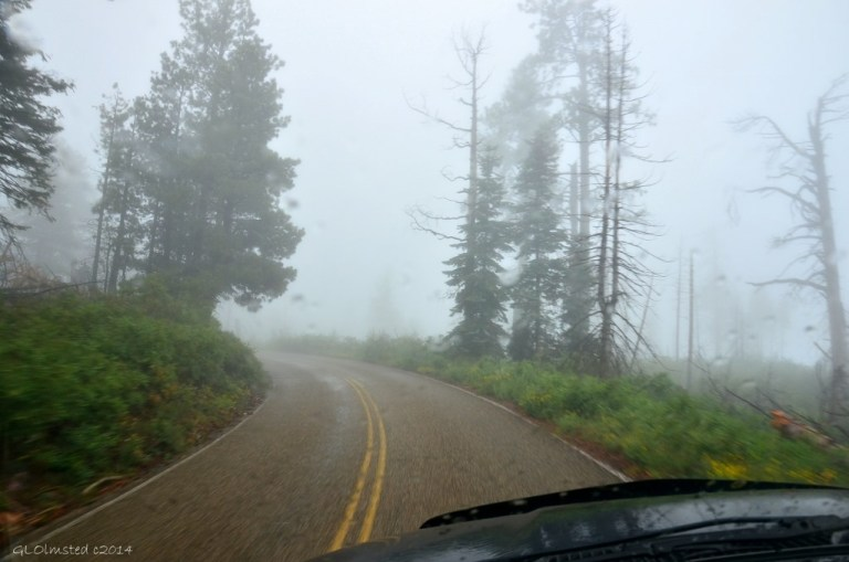 Foggy drive on Walhalla Plateau North Rim Grand Canyon National Park Arizona