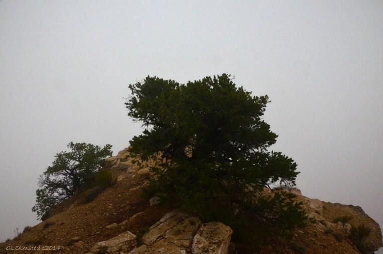 No view of canyon Cape Royal Walhalla Plateau North Rim Grand Canyon National Park Arizona