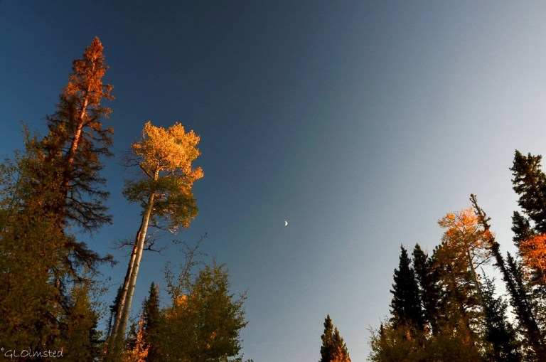Fall aspen & moon along FR610 E Kaibab National Forest Arizona