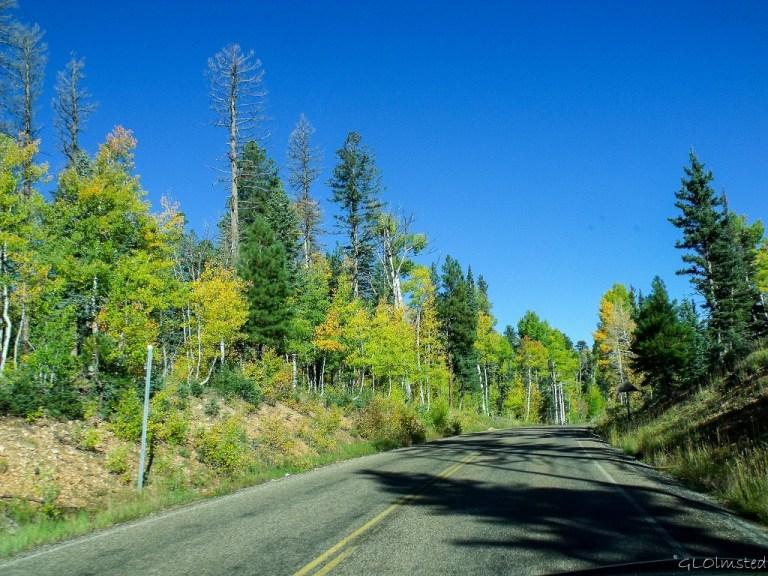 Fall aspen along SR67 North Rim Grand Canyon National Park Arizona
