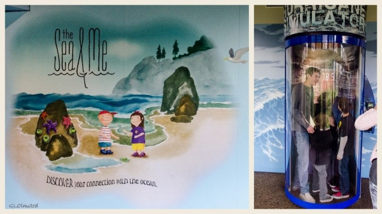 The Sea & Me exhibit and hurricane simulator Oregon Coast Aquarium Newport Oregon