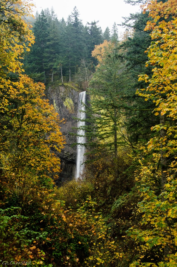 Latourell Falls Guy W Talbot State Park Columbia River Historic Scenic Highway Oregon