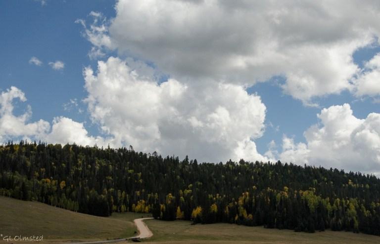 Fall aspen along meadow FR22 Kaibab National Forest Arizona