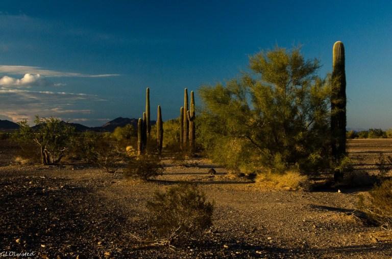 Saguaros & Dome Rock Mountains La Paz BLM Quartzsite Arizona