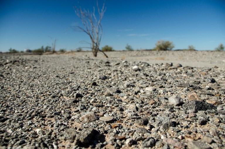 Rocky desert & ocotillo Ogilby Road BLM California
