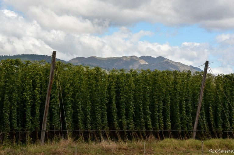 Hops N12 north of George South Africa